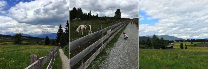 Wandertipp Villanders Dolomiten Eisacktal Pony Villanderer Alm Streichelzoo Familienausflug Eisacktal Kinder