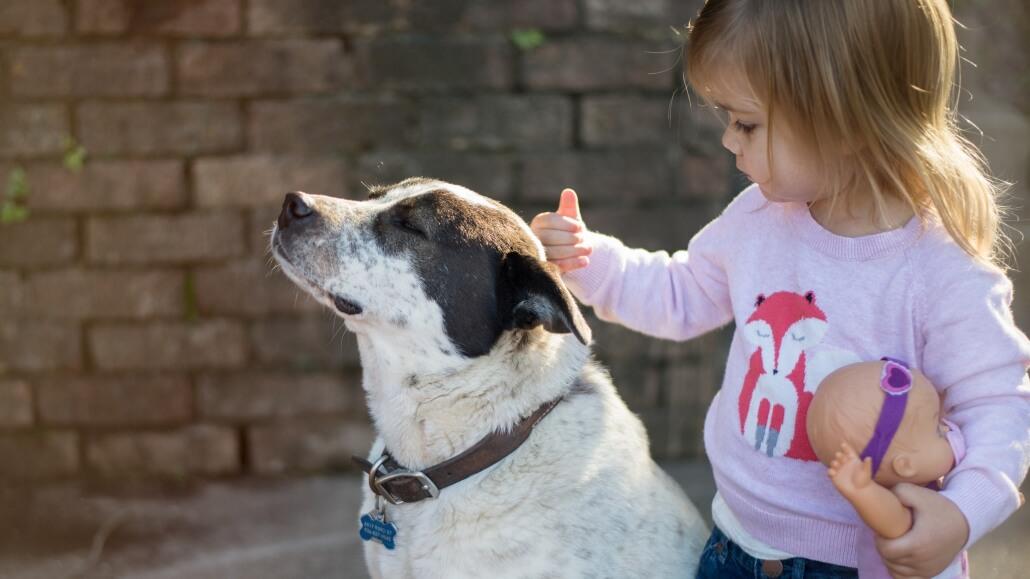 10 Fragen vor dem Hundekauf