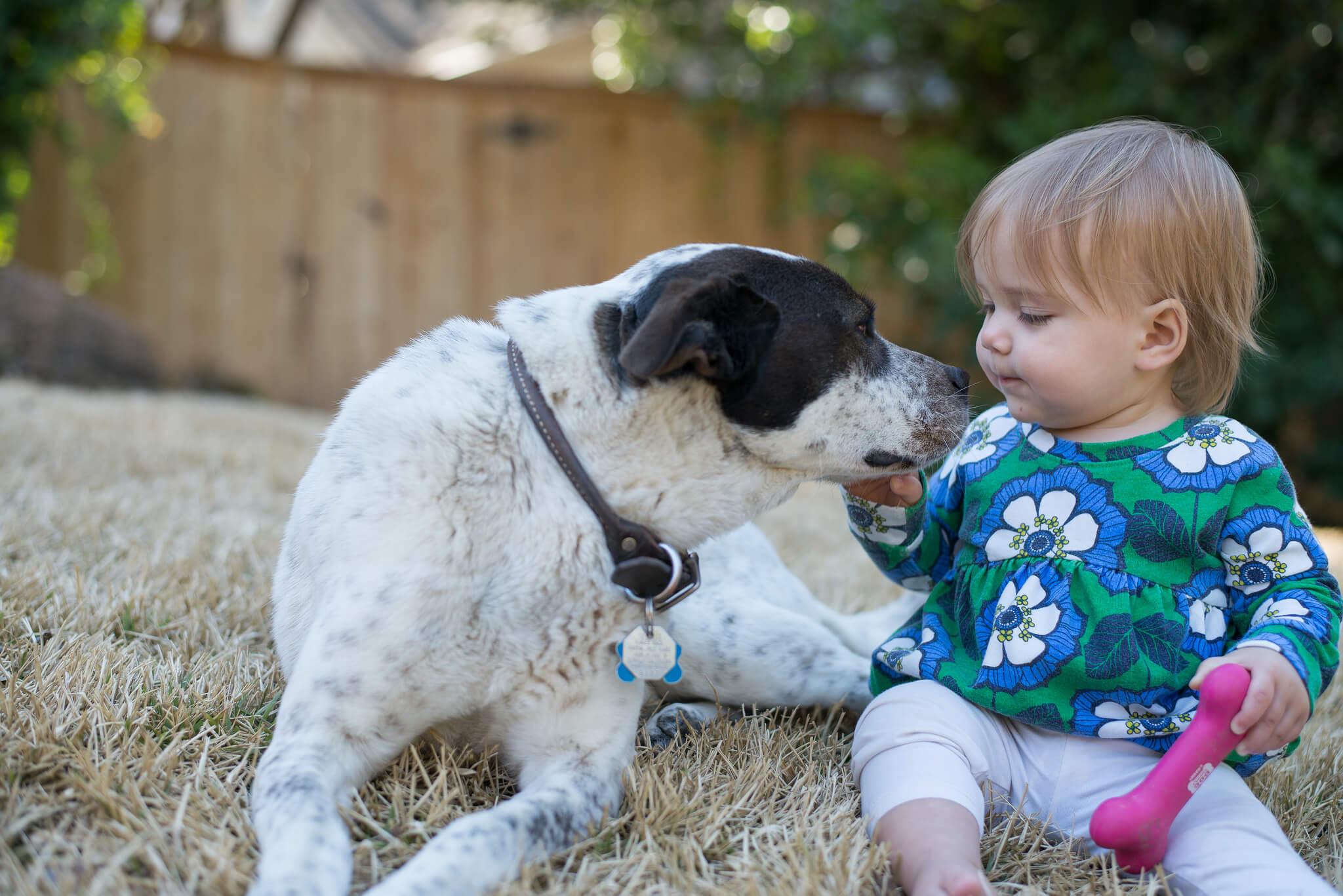 Kind und Hund Was ist der richtige Familienhund