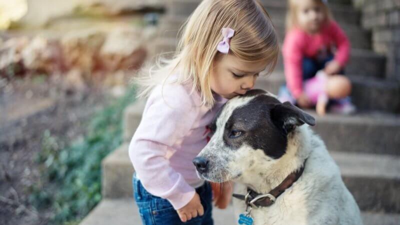 Kind und Hund Regeln im gemischten Haushalt