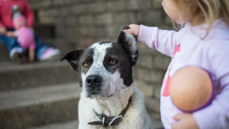 Sicherer-Umgang-zwischen-Hund-und-Kind