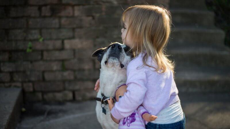 Harmonisches Zusammenleben durch 3 Regeln im Kinder und Hunde Haushalt