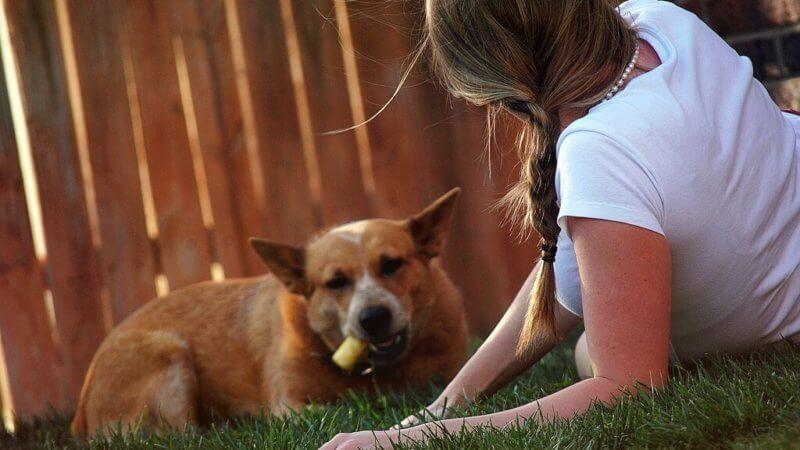kennenlernen hund baby