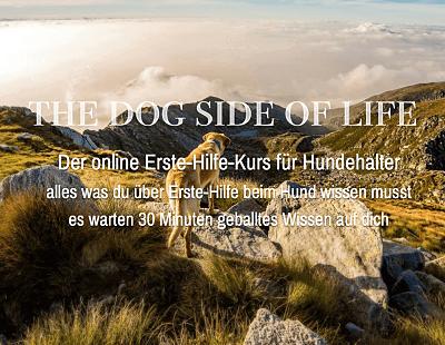 Erste-Hilfe-Kurs-Hund-von-the-dog-side-of-life