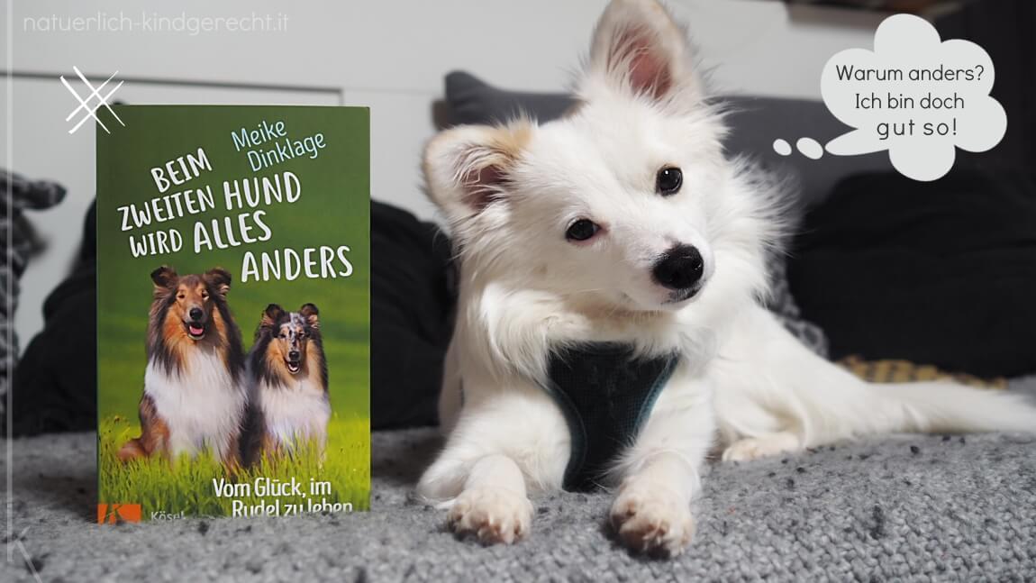 Beim zweiten Hund wird alles anders - Vom Glück im Ruden zu lesen Buchrezension
