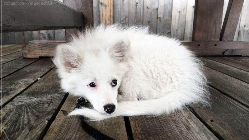 Was-wir-aus-der-Welpenzeit-mit-unserem-Familienhund-gelernt-haben