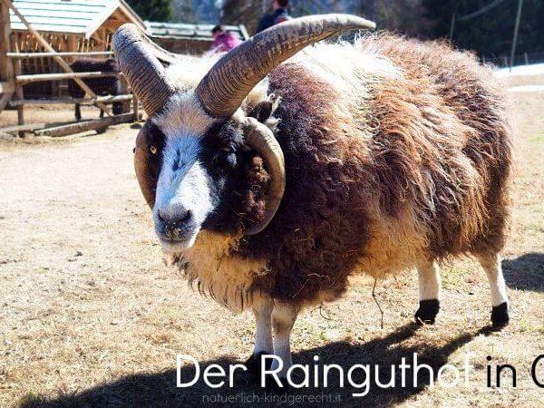 Besuch-in-der-Tierwelt-Rainguthof-in-Tisens-Gfrill