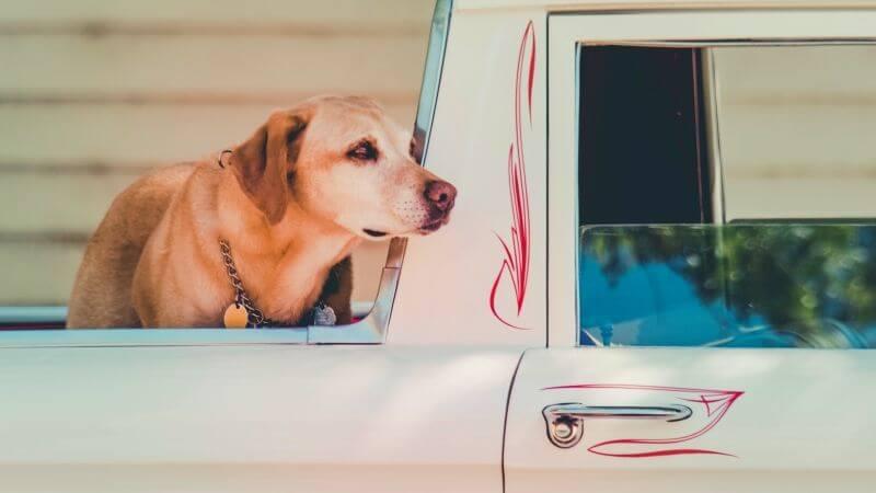 Sicherheit-Hund-im-Auto-Box-oder-Geschirr