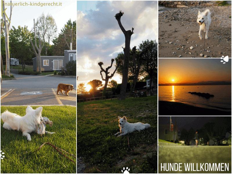 Hundecamping-am-Gardasee-Camping-Village-San-Francesco