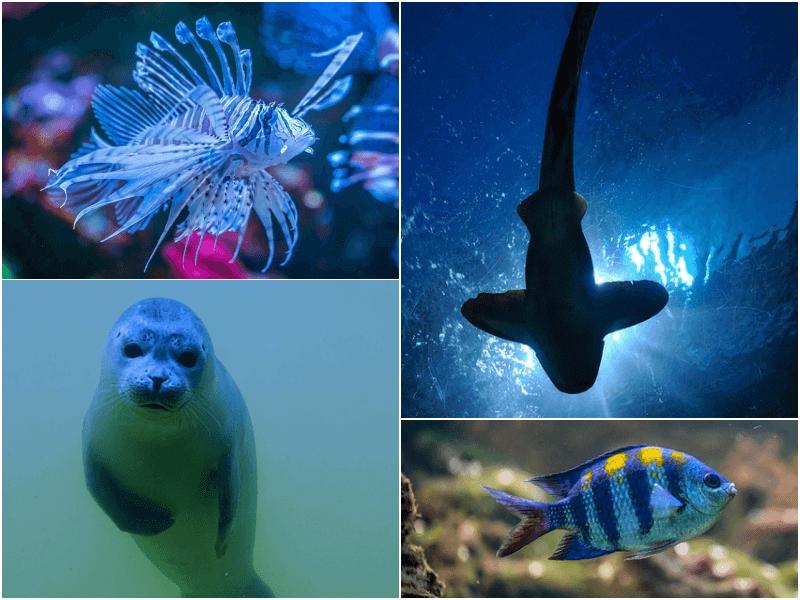 Sea Life Acquarium Gardaland
