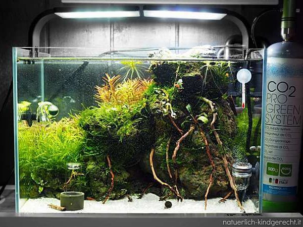 Abbild eines Kinderaquariums von Blau aquaristik in der Größe 40x28x25 cm
