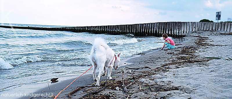 Bau Bau Beach Hundestrand Adriaküste