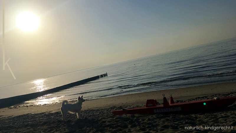 Hundestrand Urlaub mit Hund Italien Emilia Romagna Nationalpark Podelta