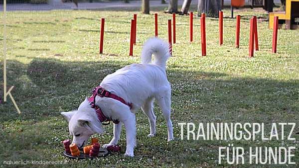 Trainingsplatz für Hunde Ferienanlage Spiaggia Romea Lido delle Nazioni