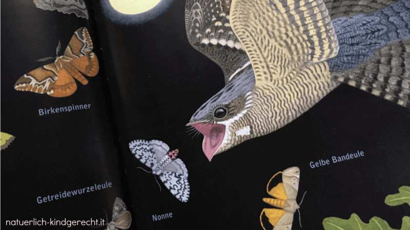 Einblick in das Buch Eule Fuchs und Fledermaus