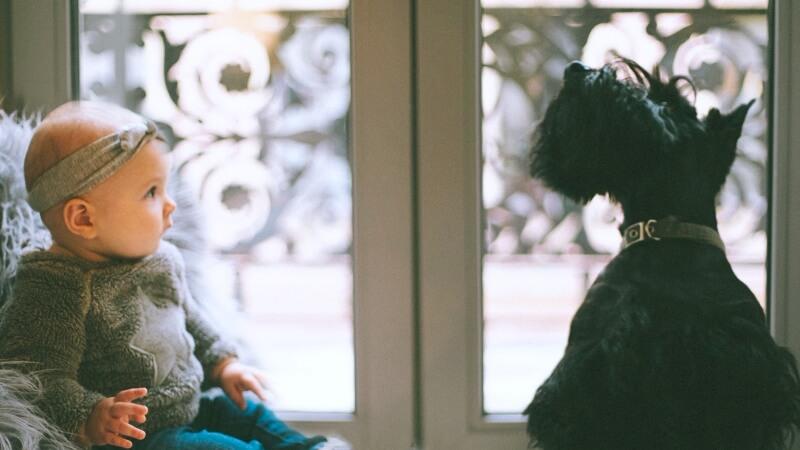 Kind und Hund sitzen gemeinsam vor dem Fenster und beobachten