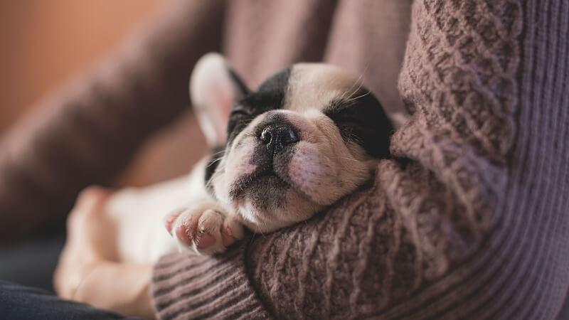 Geräuschangst beim Hund Das kannst du tun