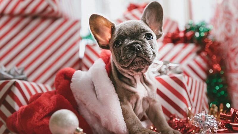 Angst vor Geräuschen beim Hund Silvester Angst Hund