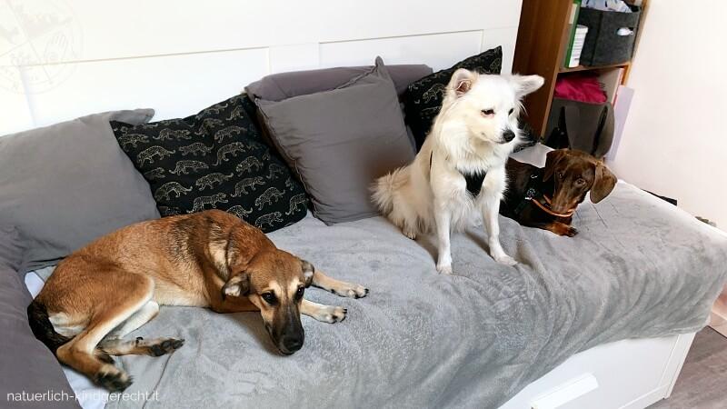 Haltung von zwei und mehreren Hunden Tipps