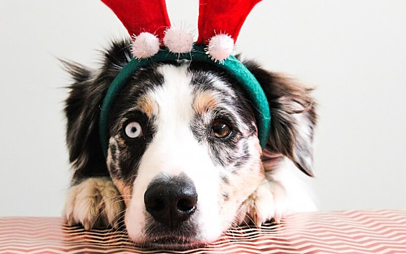 Hilfe wie kann ich meinem Hund an Silvester helfen Angst