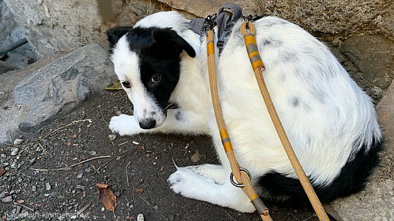 Angsthund helfen Deprivationssyndrom Tierschutzhund