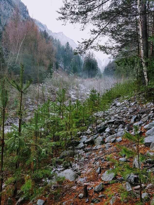 Glücklich durch Waldbaden Südtirol