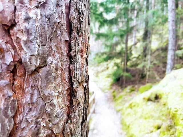 Natürlich glücklich im Wald