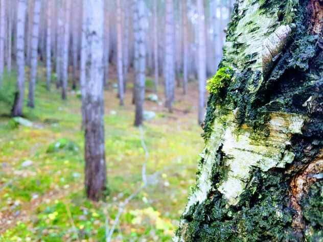 Wald erleben in Südtirol Waldbaden