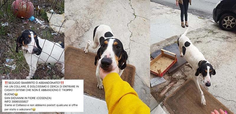 Ausgesetzt oder Streuner? - Tierschutz in Italien