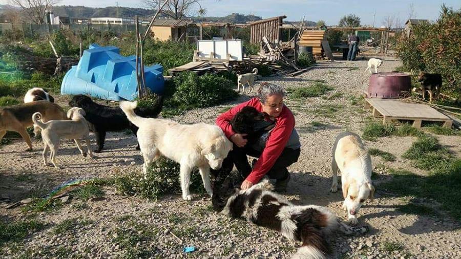 Caterina Semerano und ihre Hunde Rifugio Oasi Argo Associazione Adozione Argo