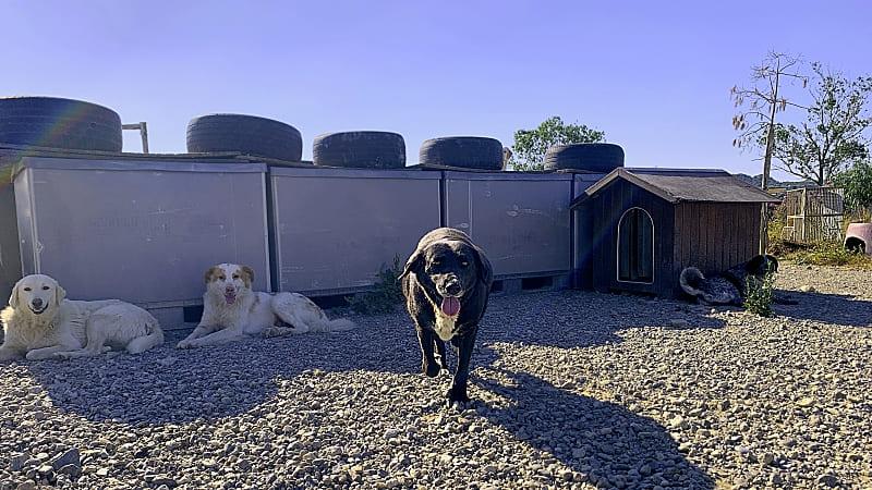 Lisa Siciliano e i cani dell Oasi Argo della Calabria Adozione Argo