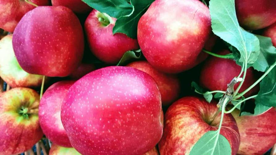 Äpfel aus Südtirol Rezeptideen