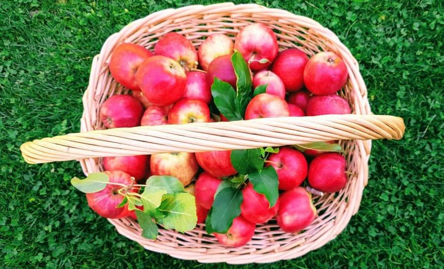 Apfelkuchen mit Haferflocken Südtiroler Äpfel Rezept