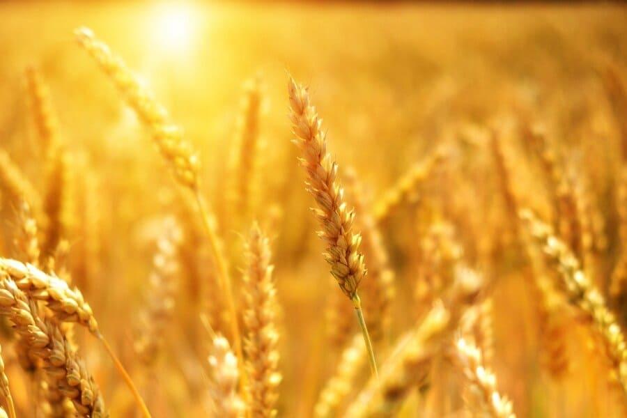 Getreide hausgemachter Nudelteig auf italienische Art