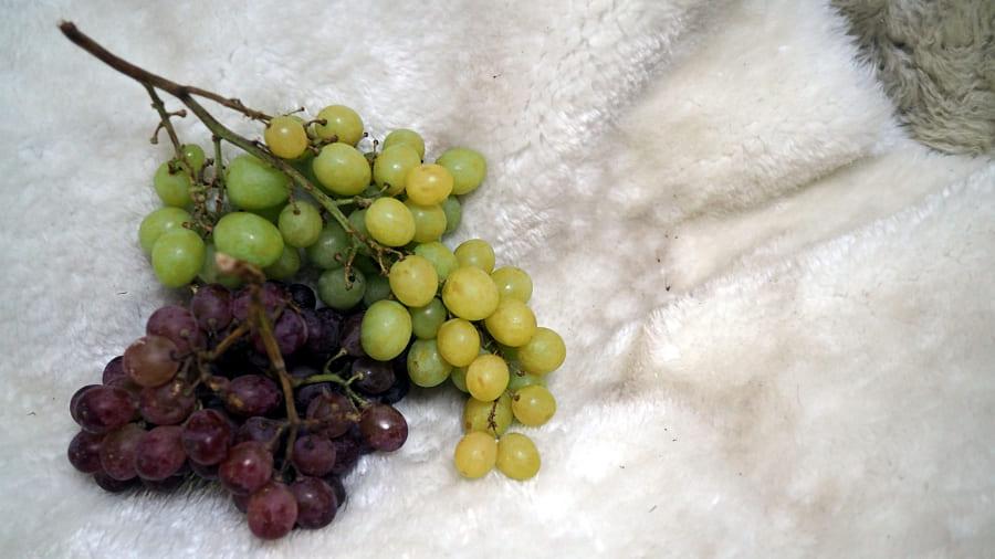 Frox Box Südtirol oder Bioexpress Welches Obstkistl sollte ich bestellen