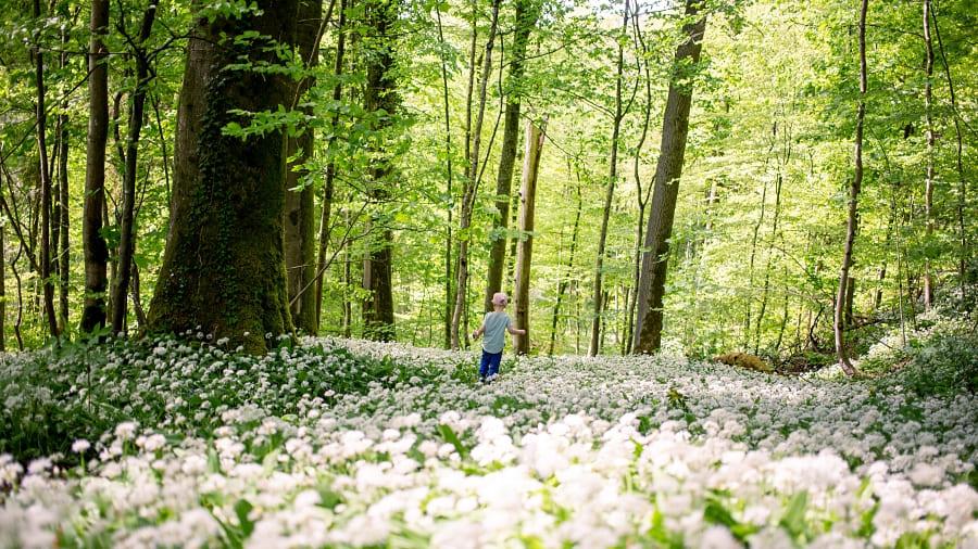 Kind im Wald voller Zecken Was tun gegen Zecken Zeckenschutz Wie entferne ich eine Zecke
