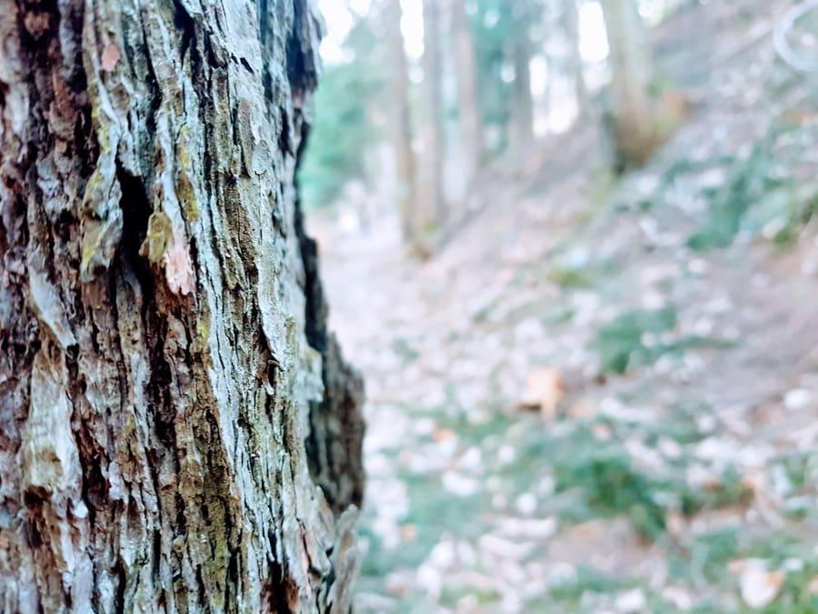 Stark wie ein Baum